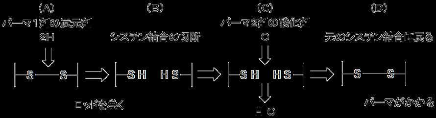 パーマはシスチン結合の還元と酸化の化学反応でパーマがかかります。