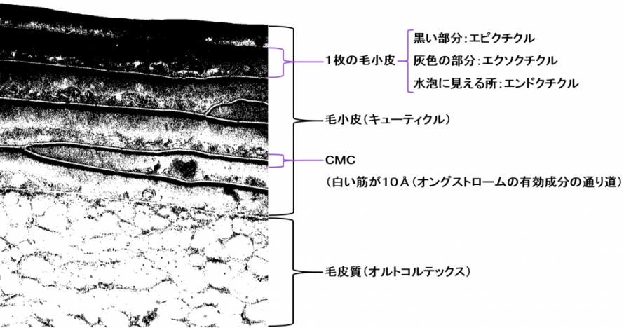 電子顕微鏡の画像