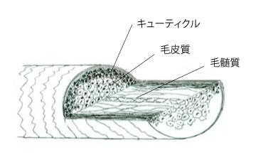 hairmap011